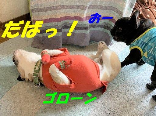 IMG_1166.jpg