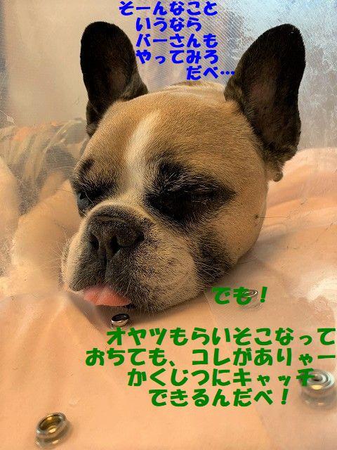 IMG_2476_20190531110745252.jpg