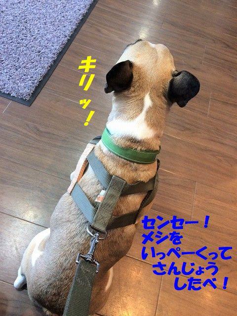IMG_7129_20190311085851ca4.jpg