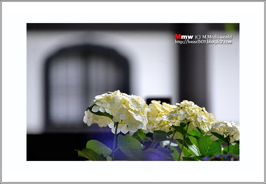 fc2_6_25.jpg