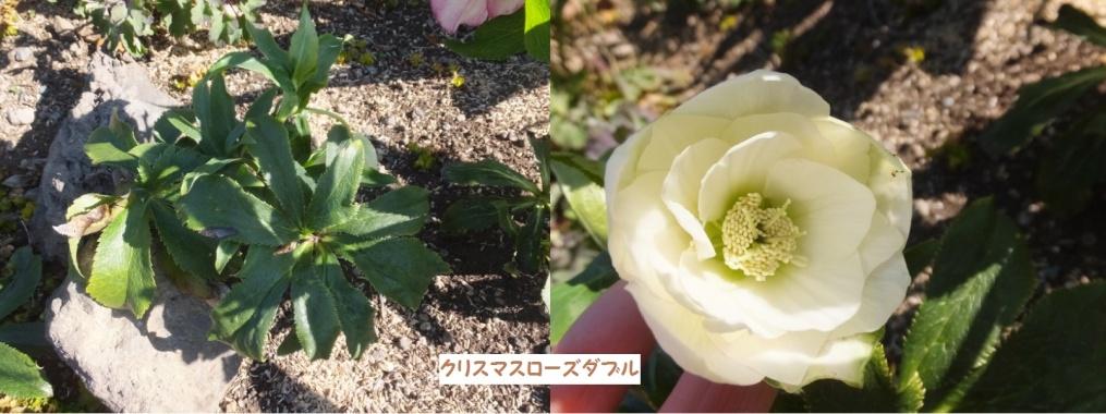 2DSCF1079_1_1.jpg