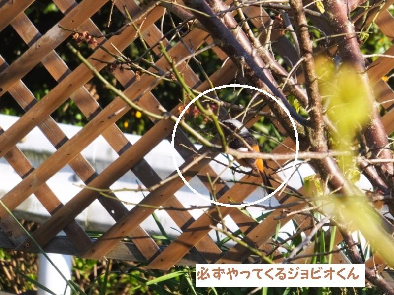 DSCF0698_1.jpg