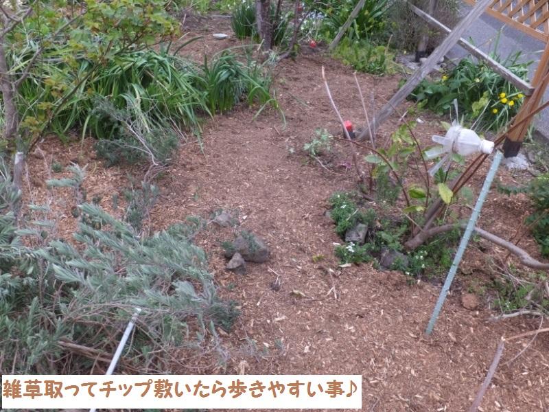 DSCF0750_1.jpg