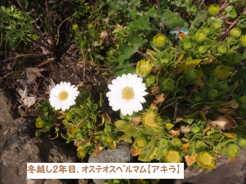 DSCF0844_1_201903281337319fb.jpg
