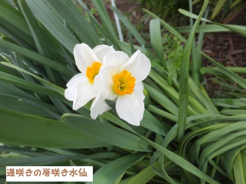 DSCF0855_1.jpg