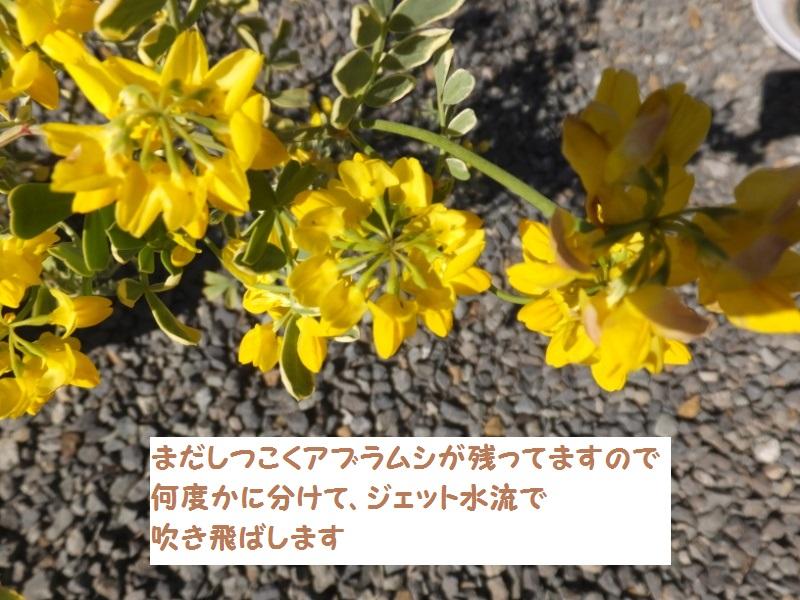 DSCF0991_1_201904011946264dc.jpg