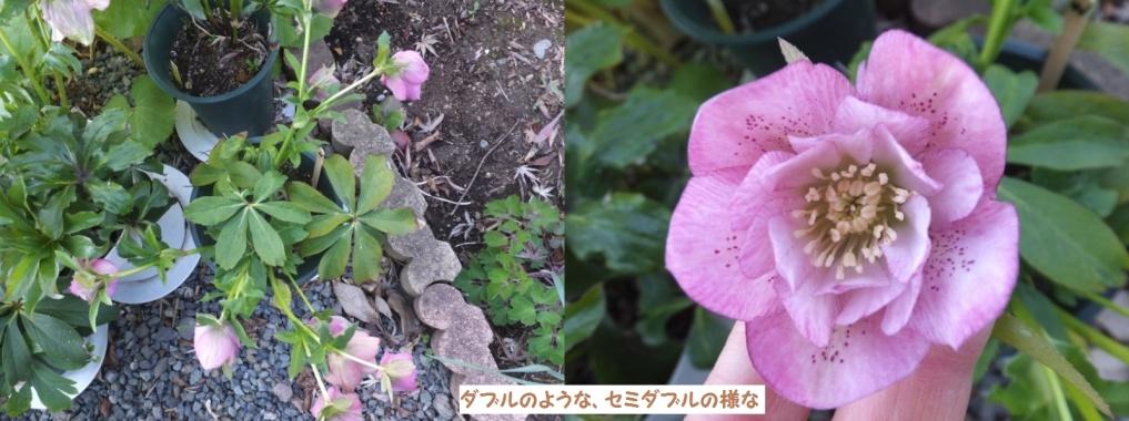DSCF1092_1_1.jpg