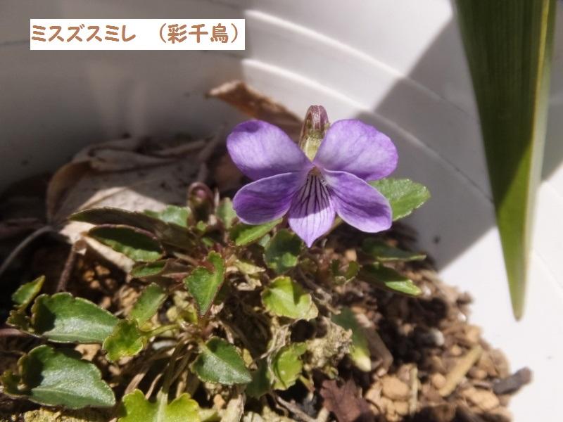 DSCF1134_1.jpg