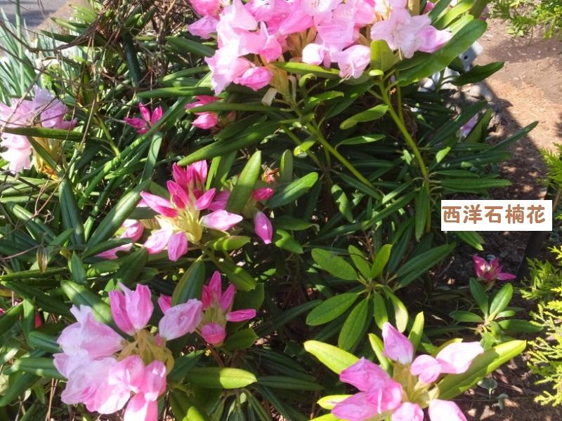 DSCF1238_1.jpg