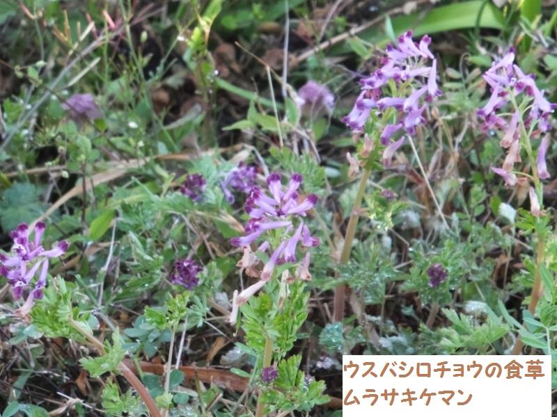 DSCF1350_1.jpg