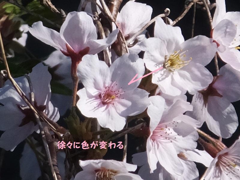 DSCF1351_1_2019040919292003c.jpg