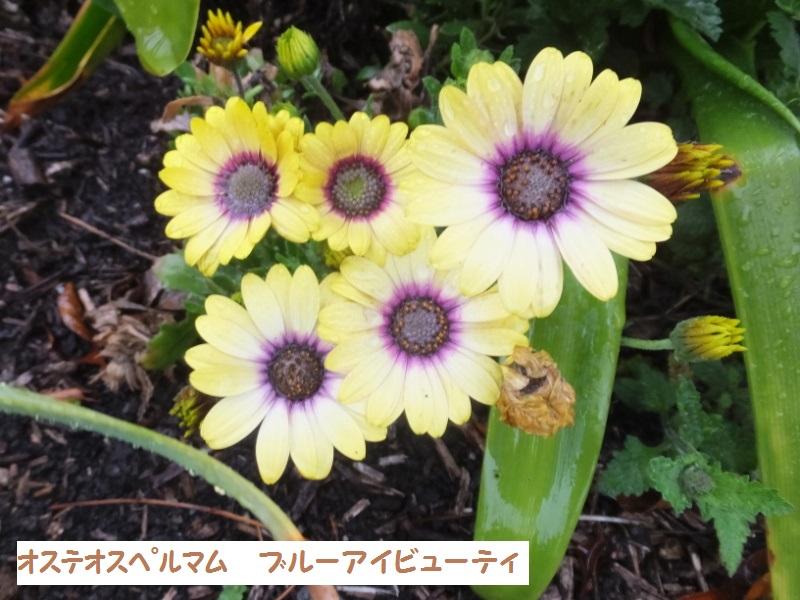 DSCF1394_1.jpg