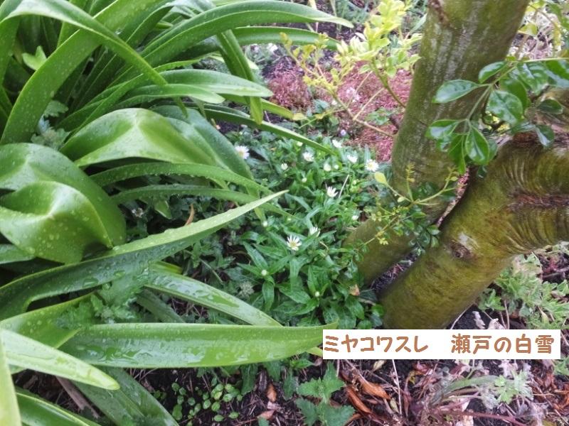 DSCF1395_1.jpg