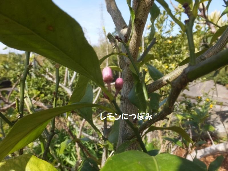 DSCF1401_1.jpg