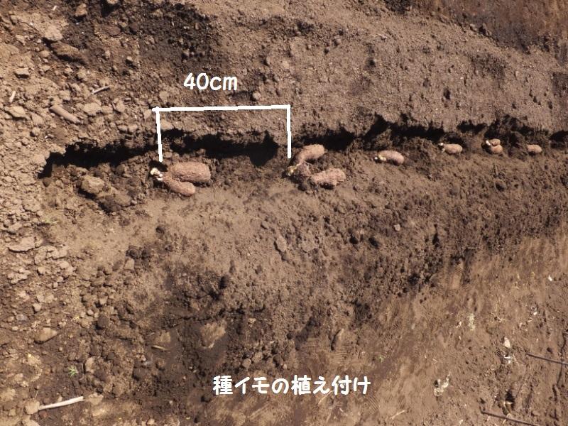 DSCF1808_1.jpg