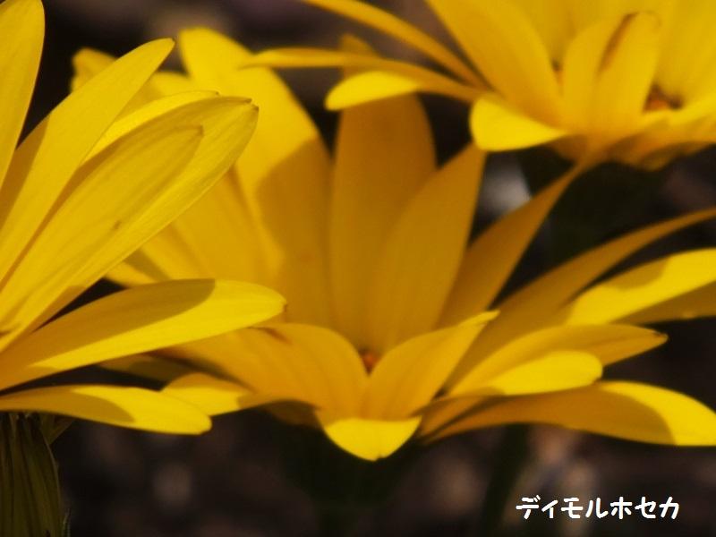 DSCF1867_1.jpg
