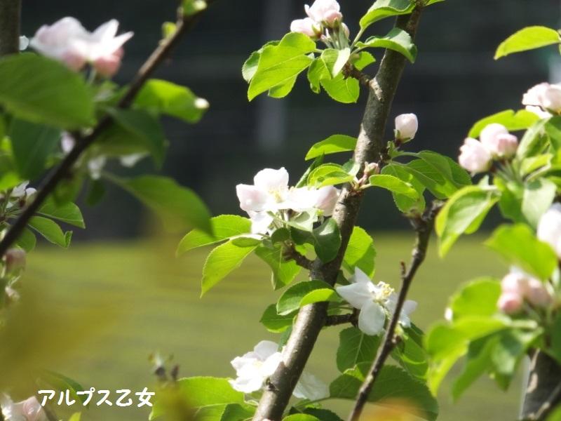 DSCF1881_1.jpg
