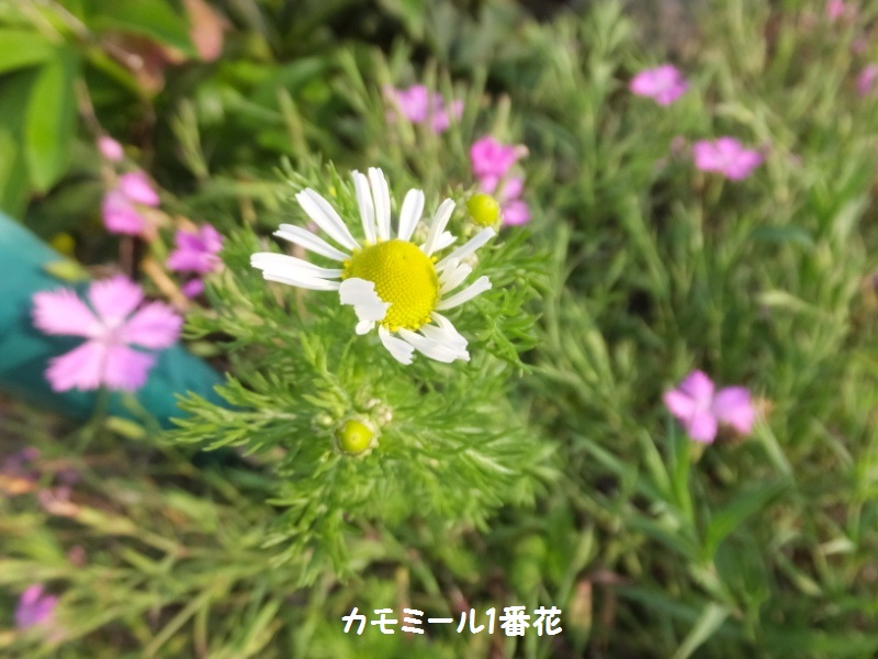 DSCF2068_1.jpg