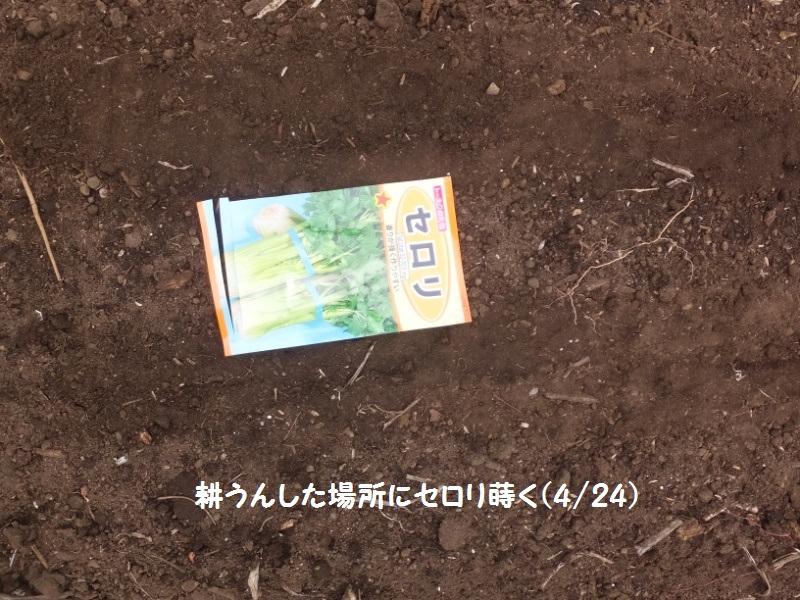 DSCF2150_1_20190424194305343.jpg