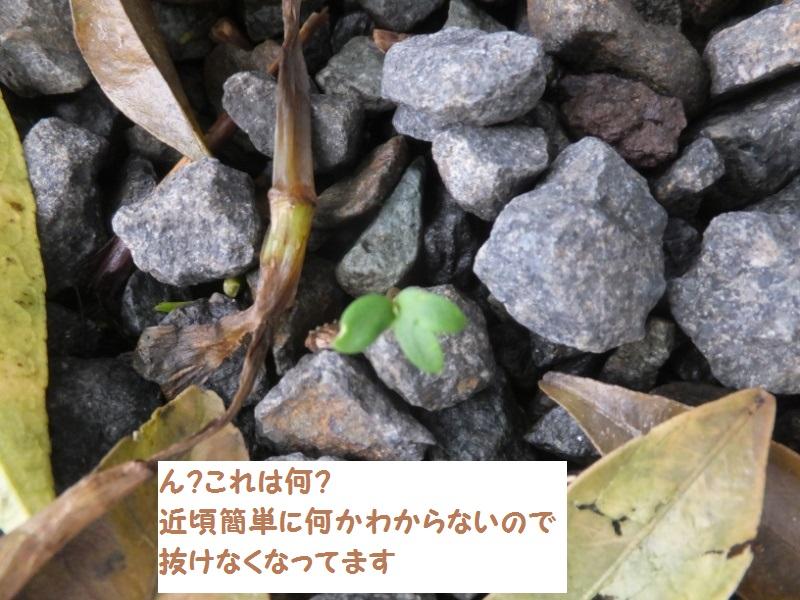 DSCF2495_1.jpg