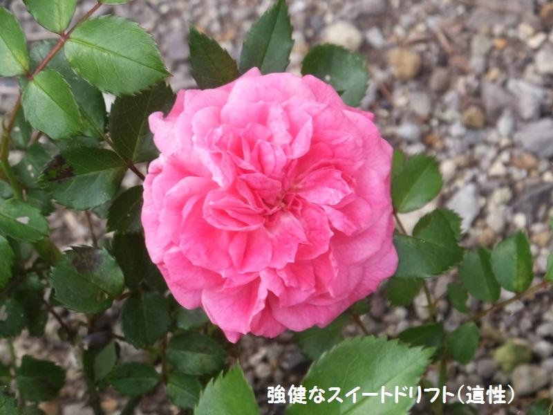 DSCF3013_1.jpg