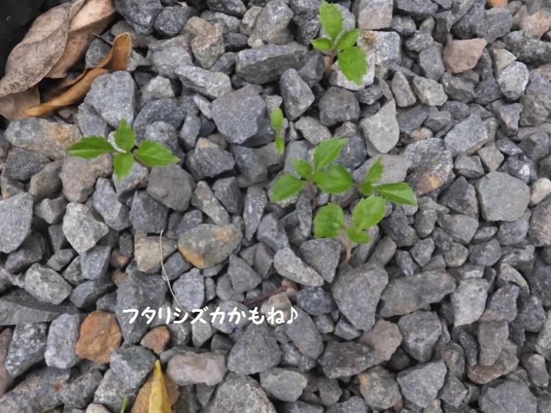 DSCF3030_1.jpg