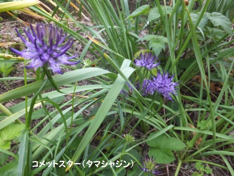 DSCF3092_1.jpg
