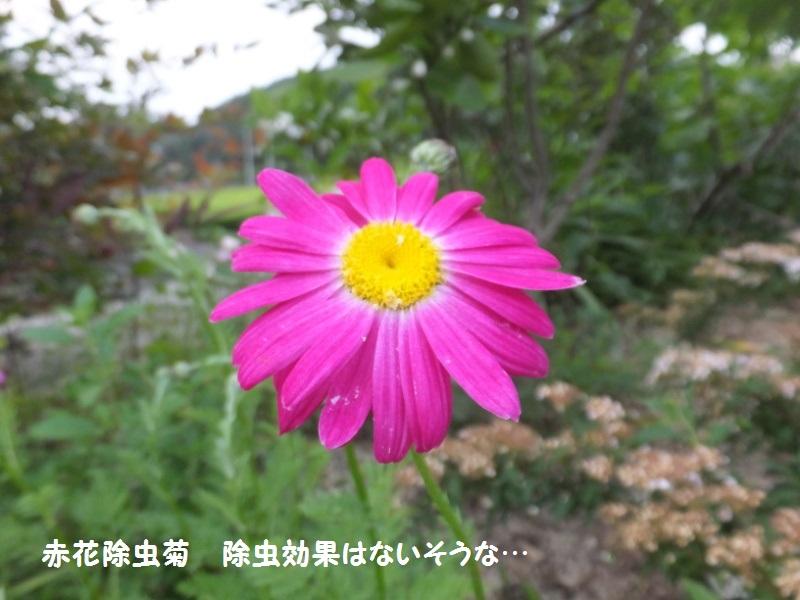 DSCF3101_1.jpg