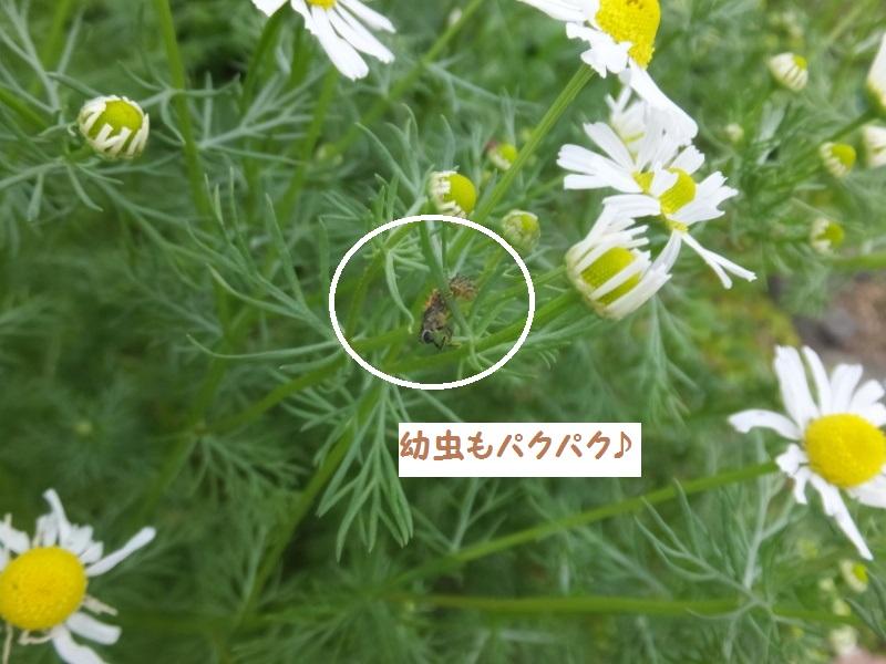 DSCF3297_1.jpg