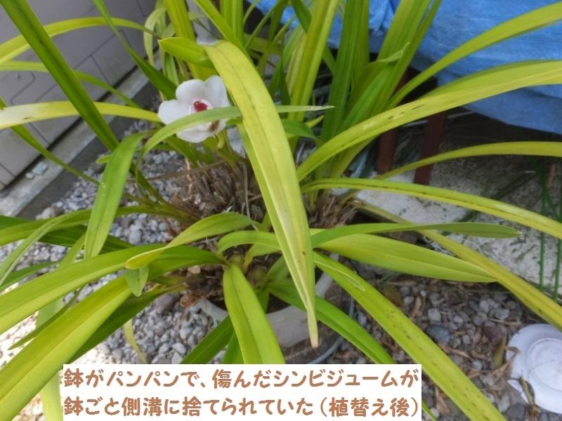 DSCF3450_2.jpg