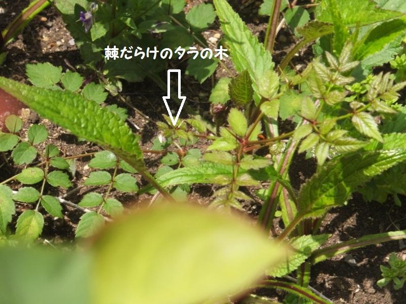 DSCF3464_1.jpg