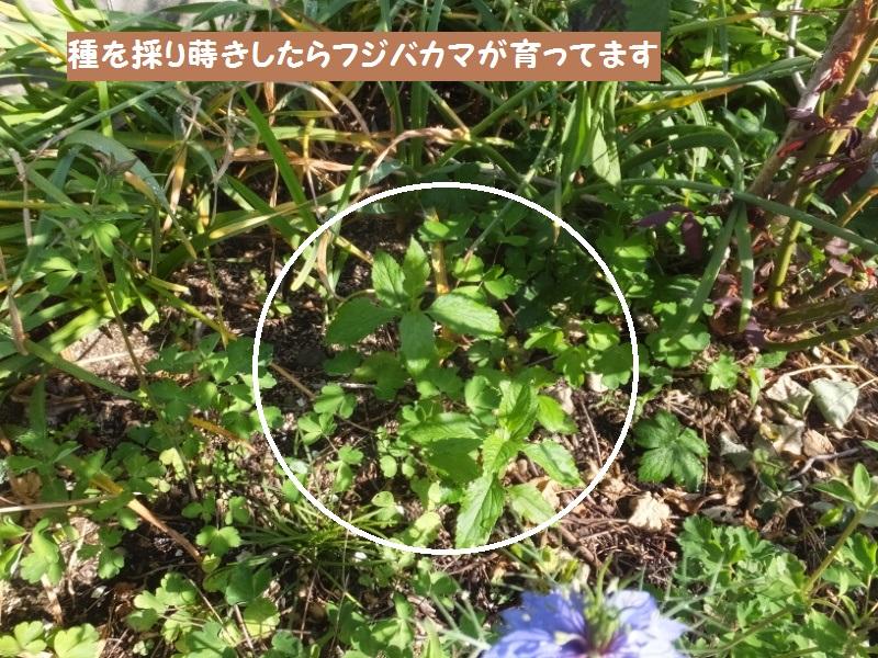 DSCF3634_1.jpg