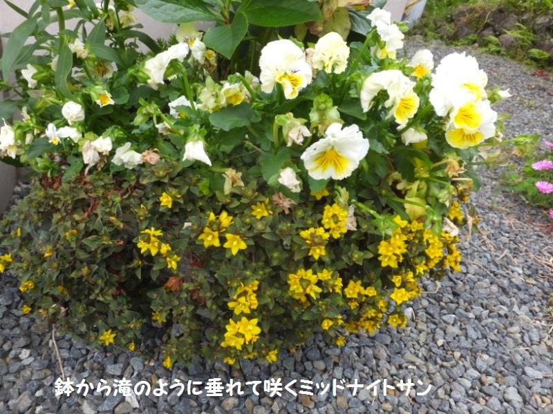 DSCF3873_1.jpg