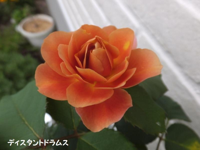 DSCF3881_1.jpg
