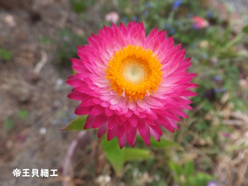 DSCF4101_1.jpg