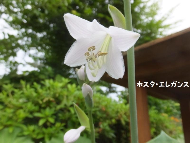 DSCF4119_1.jpg