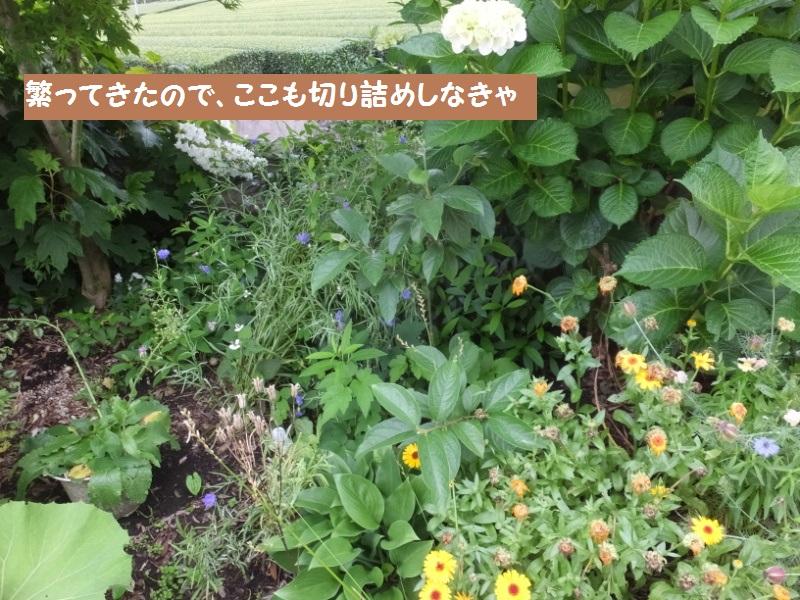 DSCF4241_1.jpg