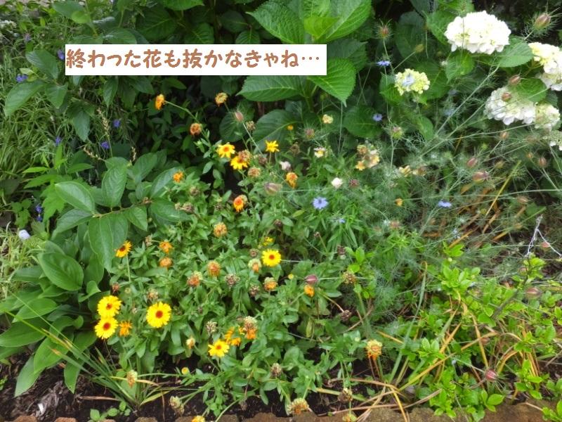 DSCF4242_1.jpg