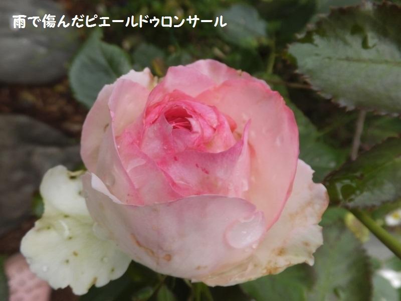 DSCF4246_1_201906122034195db.jpg