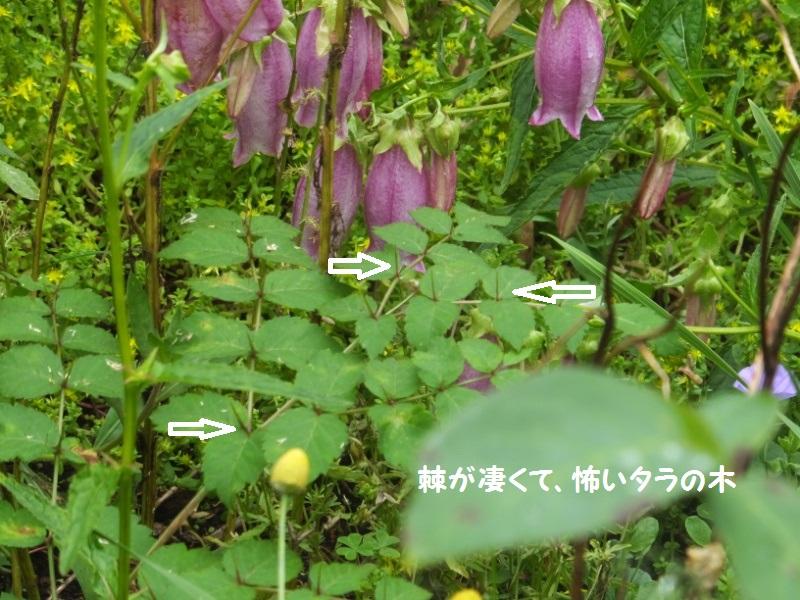 DSCF4249_1.jpg