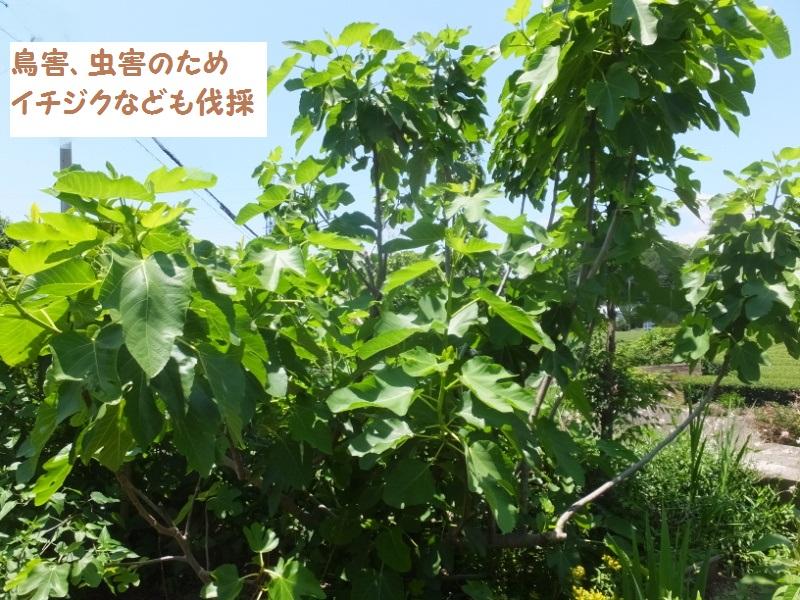DSCF4284_1.jpg