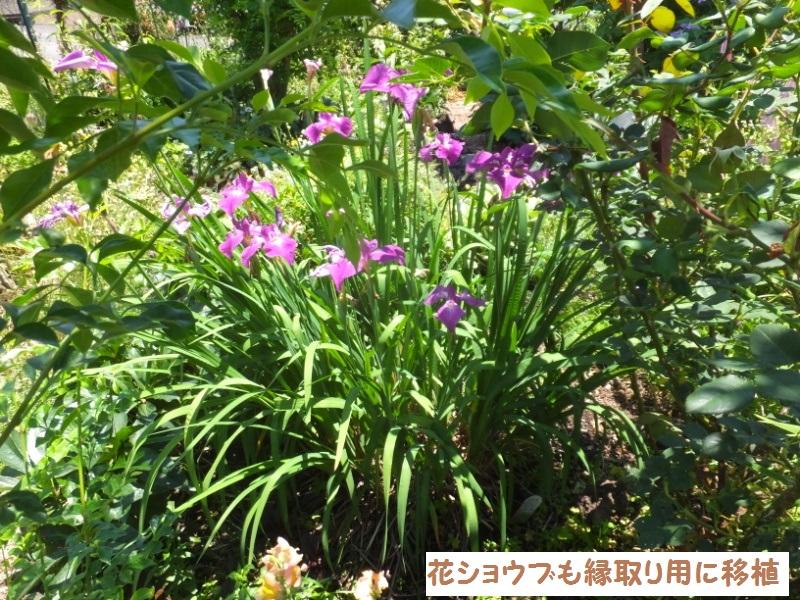 DSCF4287_1.jpg