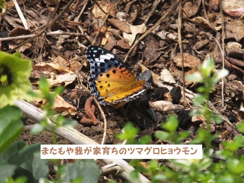DSCF4322_1.jpg