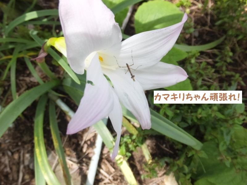 DSCF4332_1_201906142120126a7.jpg