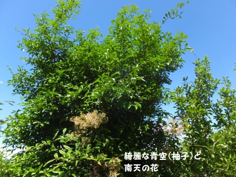 DSCF4368_1.jpg