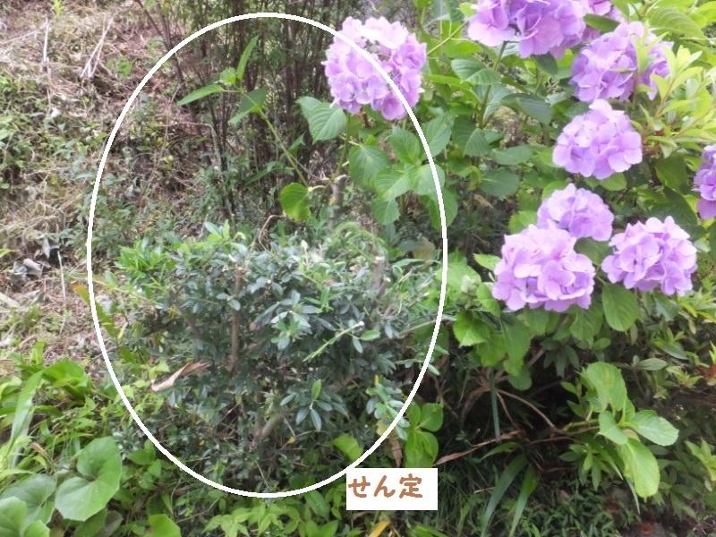 DSCF4541_1.jpg