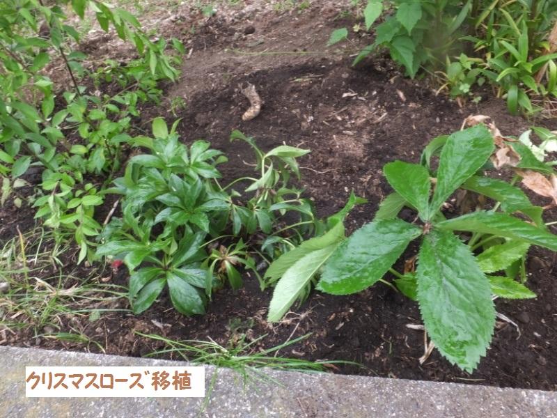 DSCF4570_1.jpg