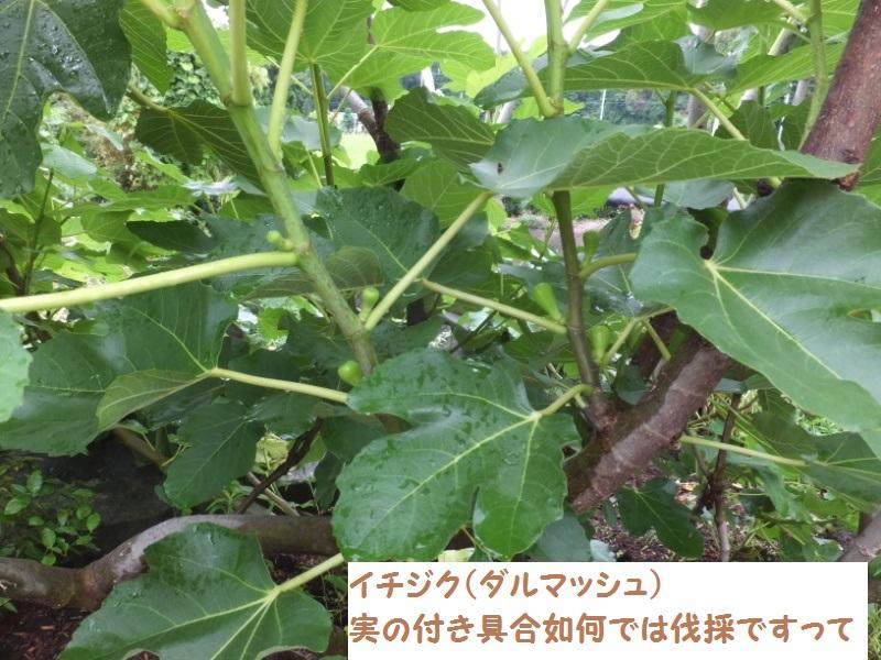 DSCF4645_1.jpg