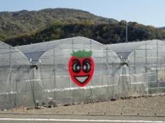 5イチゴのハウス