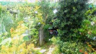 庭木コーナーb